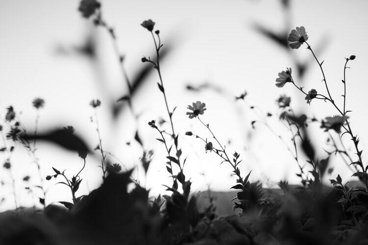 photo-by-daniel-gregoire-on-unsplash.jpg